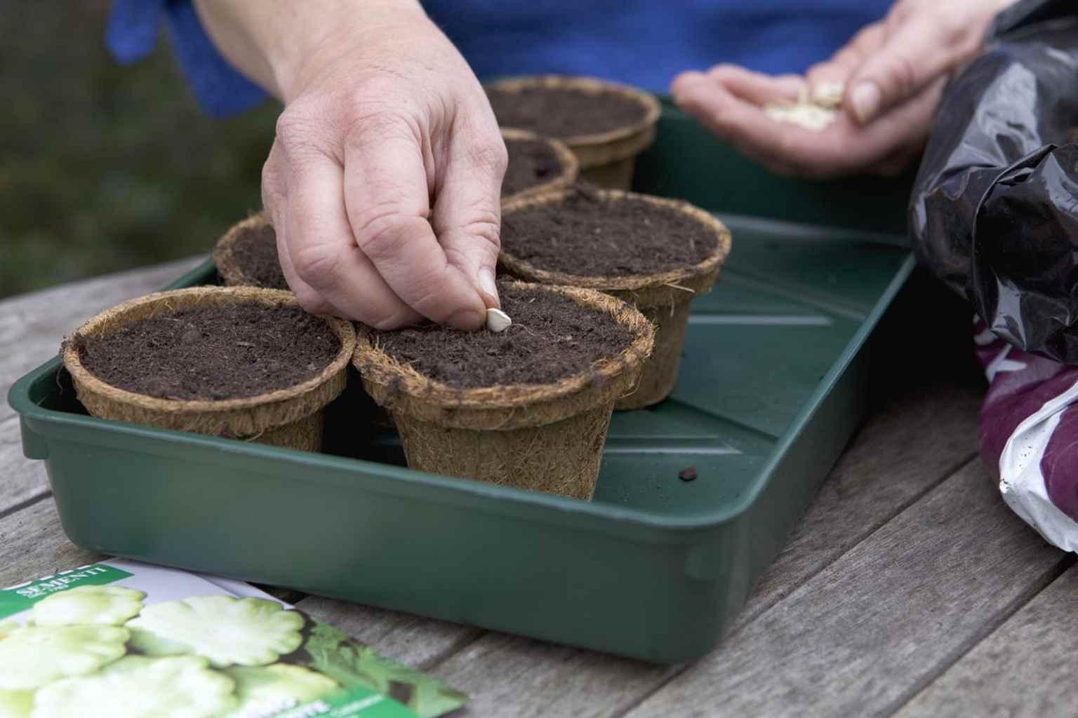 パティパンスクワッシュの栽培方法