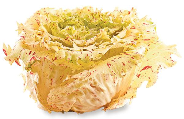バラのようなイタリア野菜 カステルフランコ