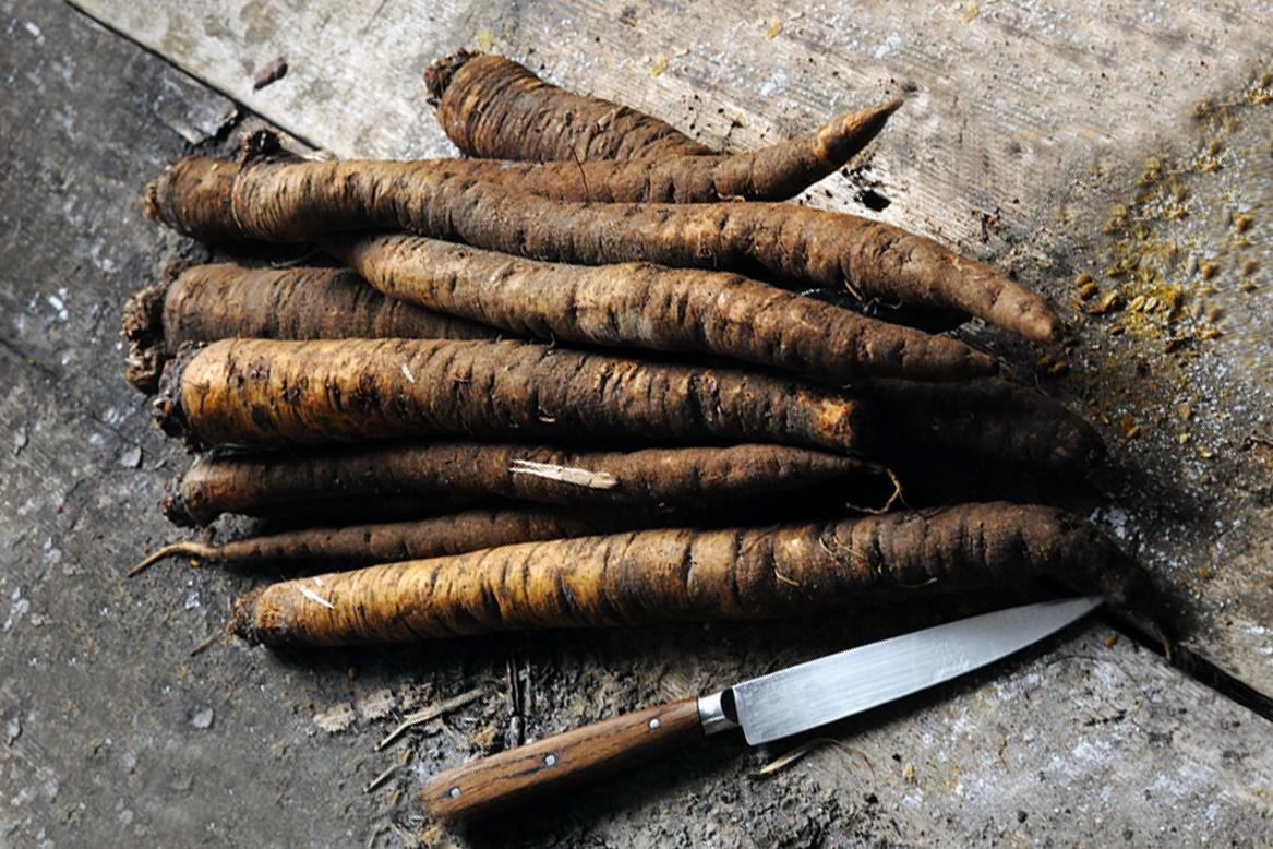 フランス料理で使われる西洋ゴボウ「サルシフィ」