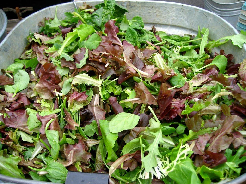 7種類の野菜の種を混合し育てた野菜ムスクラン