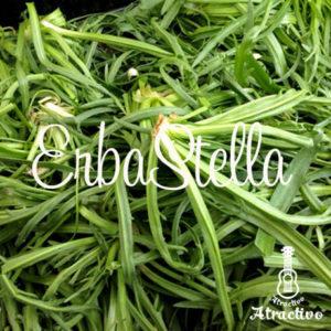 イタリア語で星の草という名の野菜・エルバステラ