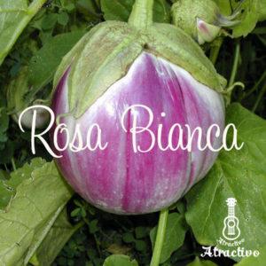 イタリアの伝統的な茄子ロッサビアンコ
