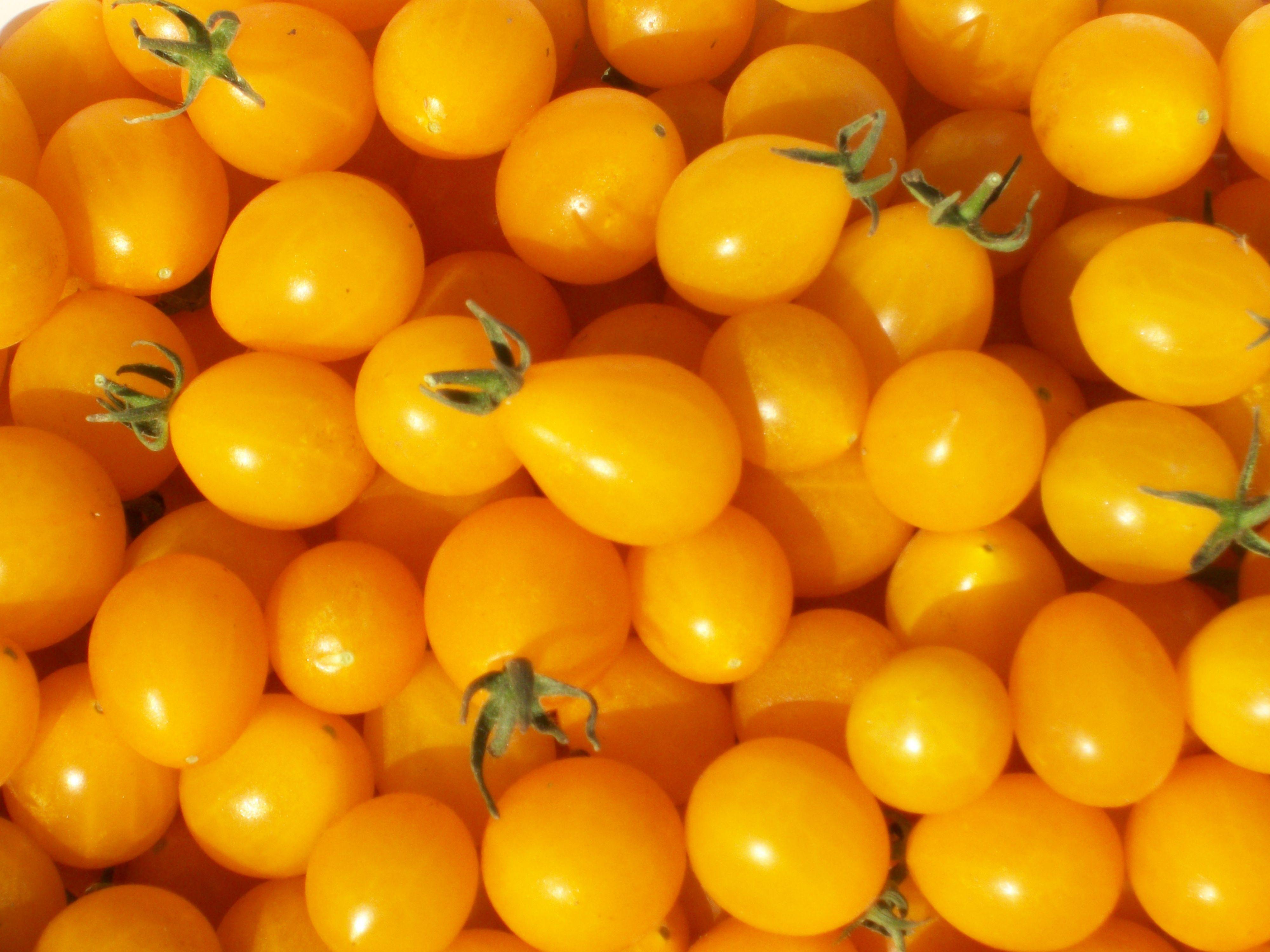スエーデン生まれの黄色いミニトマト/イルディ(イエローグレープ)