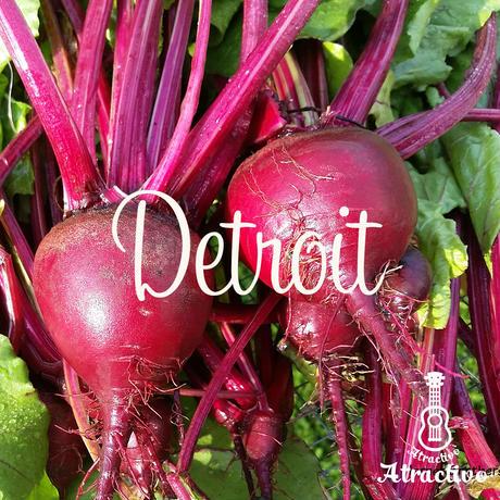 テーブルビートの代表品種「デトロイト」の種 30粒