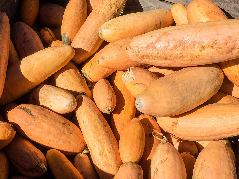アメリカで100年以上前から栽培されているピンクバナナかぼちゃ