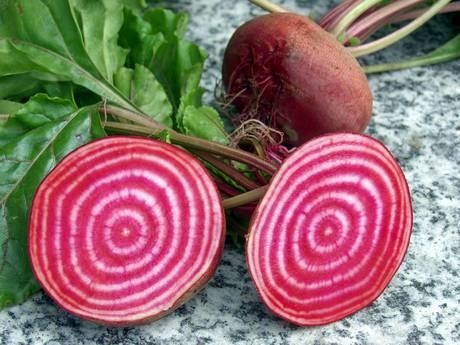 根の断面が紅白で美しいイタリア野菜のビート「ゴルゴ」