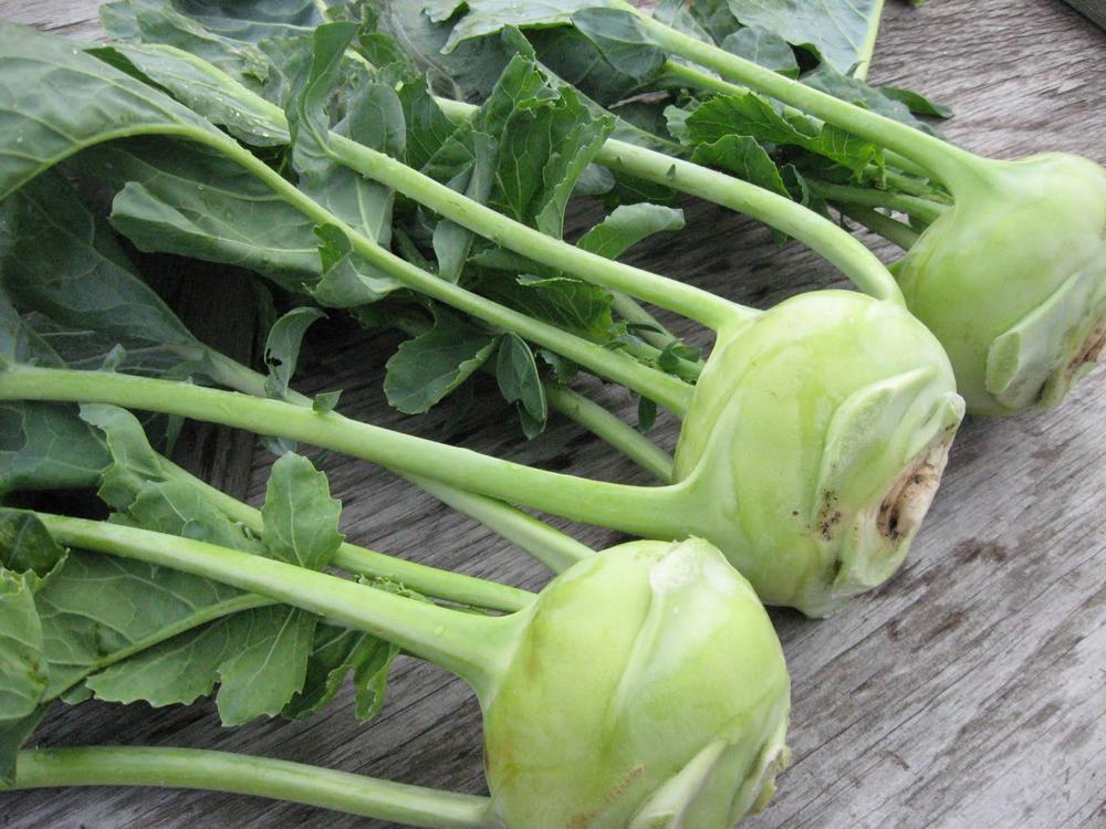 珍しいイタリア野菜「コールラビ」