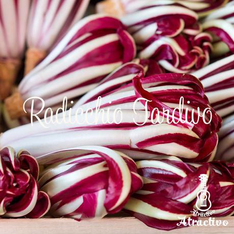 イタリアの冬野菜ラディッキオ・タルティーボの種