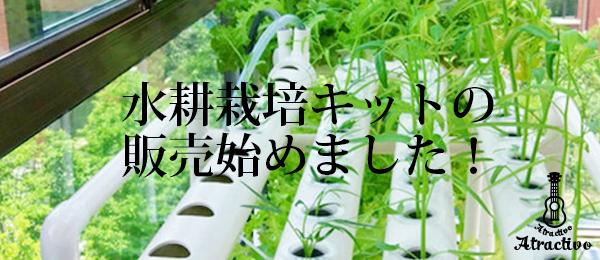 水耕栽培キットの 販売始めました!