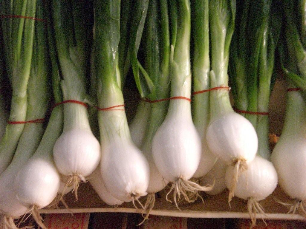 イタリア野菜の葉たまねぎ「チポロット」