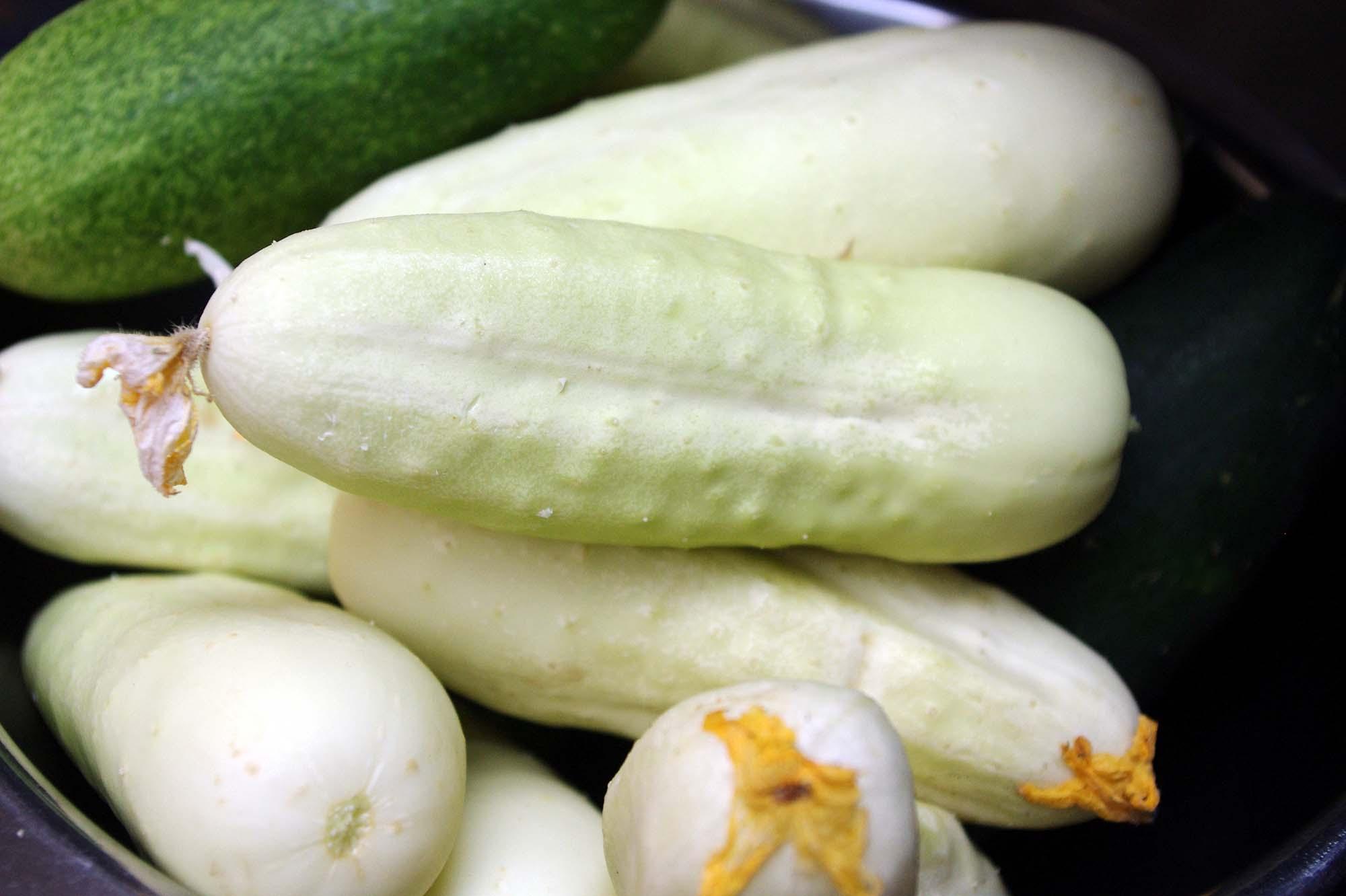 白キュウリ・メッツォの栽培方法