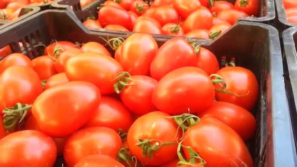 トマテ デ ペラ(Tomate de Pera)