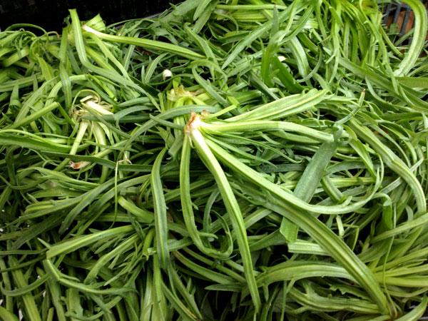 イタリア語で「星の草」という名の野菜・エルバステラ