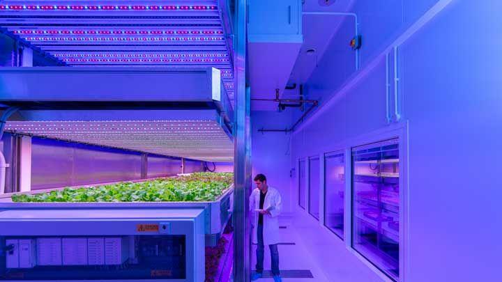 世界の水耕栽培プラント、その市場規模は?