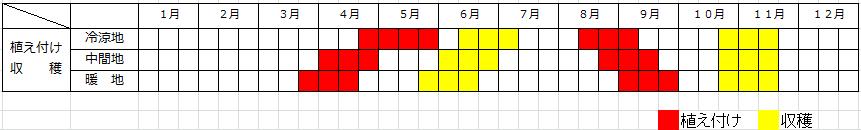 テーブルビート(トンダ デ チオッギア)の栽培方法