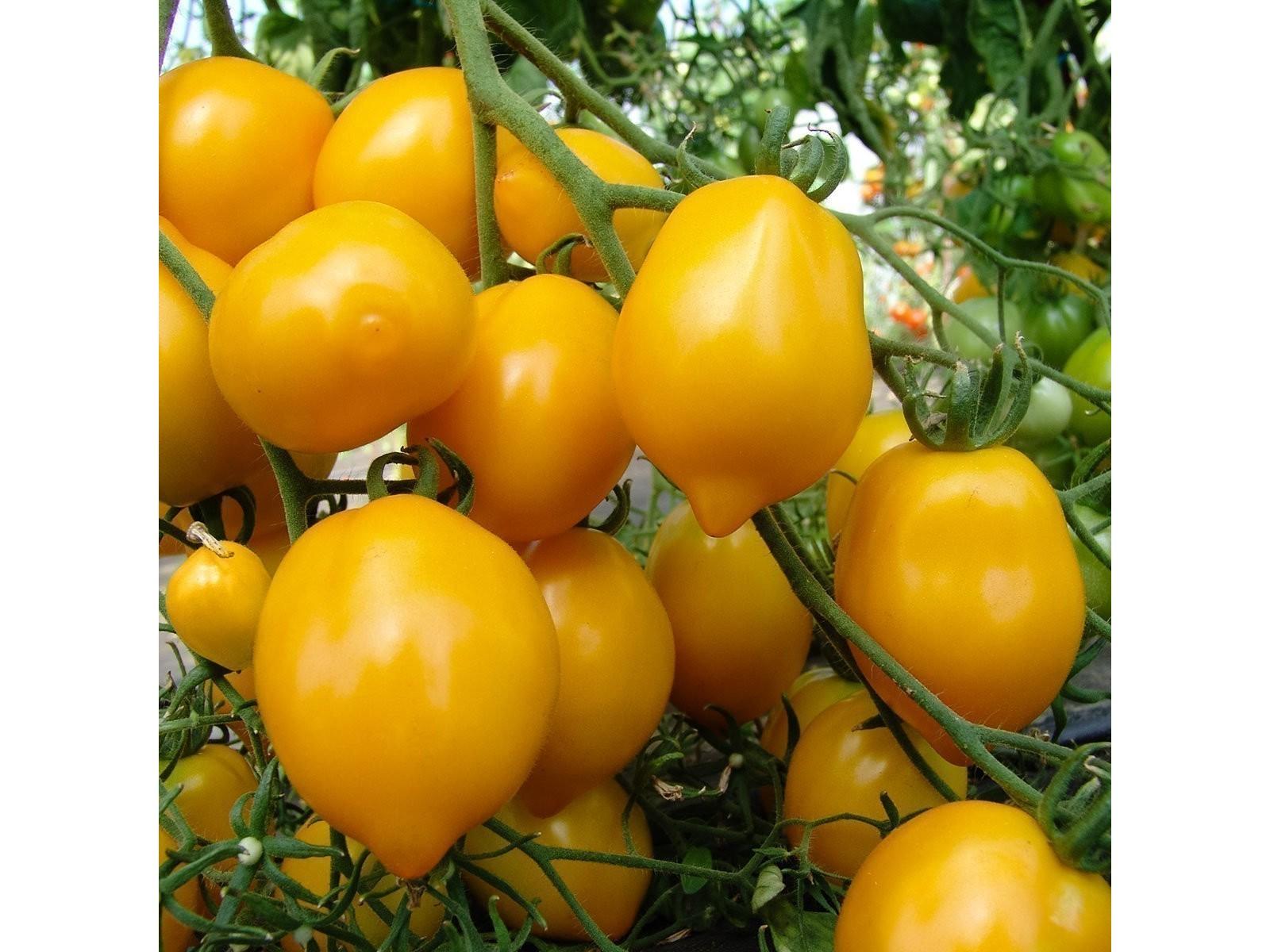 サラダとの相性が抜群レモンそっくりのプラムレモントマト