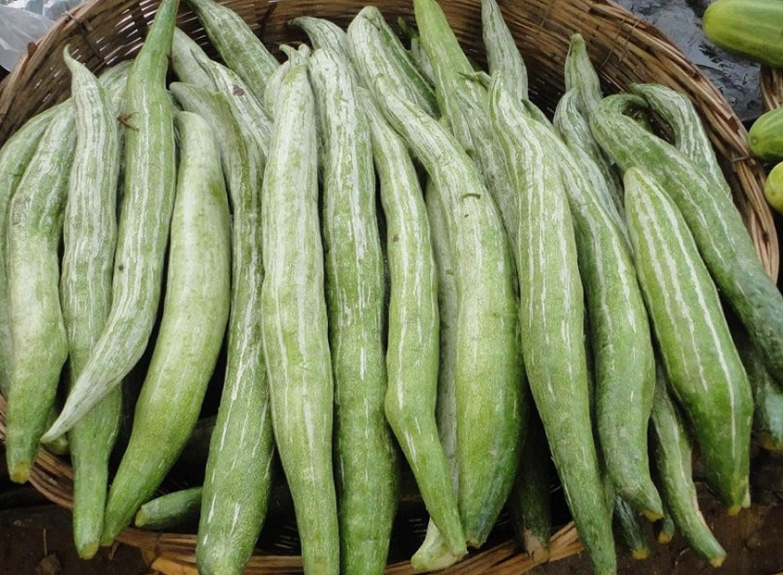 スネークゴードと呼ばれるウリ科の野菜ヘビウリ - イタリア野菜・西洋 ...